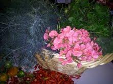 A lovely harvest- Dill, Geraniums, and Lemon Balm