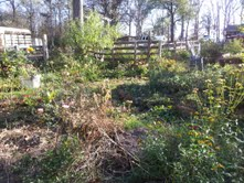 My view of the garden Monday December 10, 2012