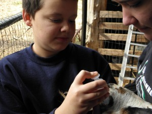 Jonathan and Savannah worming the goat, Maple.