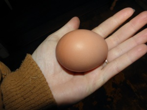 What a lovely brown egg in the pocket of my coat!