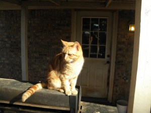 The cat was enjoying the sun, too!  This is our cracker jack mouse hunter.