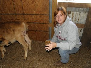 Holly doctoring the calf.