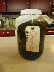 Citronella oil ready to steep.  Always label with name and date- leave nothing to chance!
