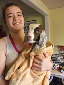 Savannah washing the new kid.