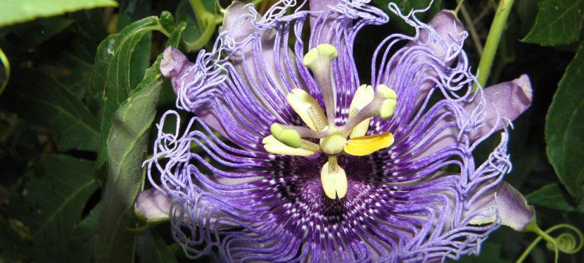 How To Make An HerbalTea