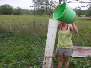 Savannah is filling Effie's waterer.
