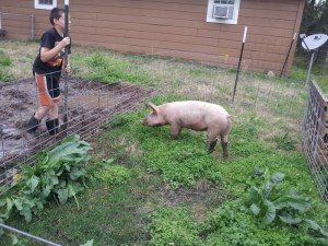 Jonathan is good at driving t-posts and loves his pig.