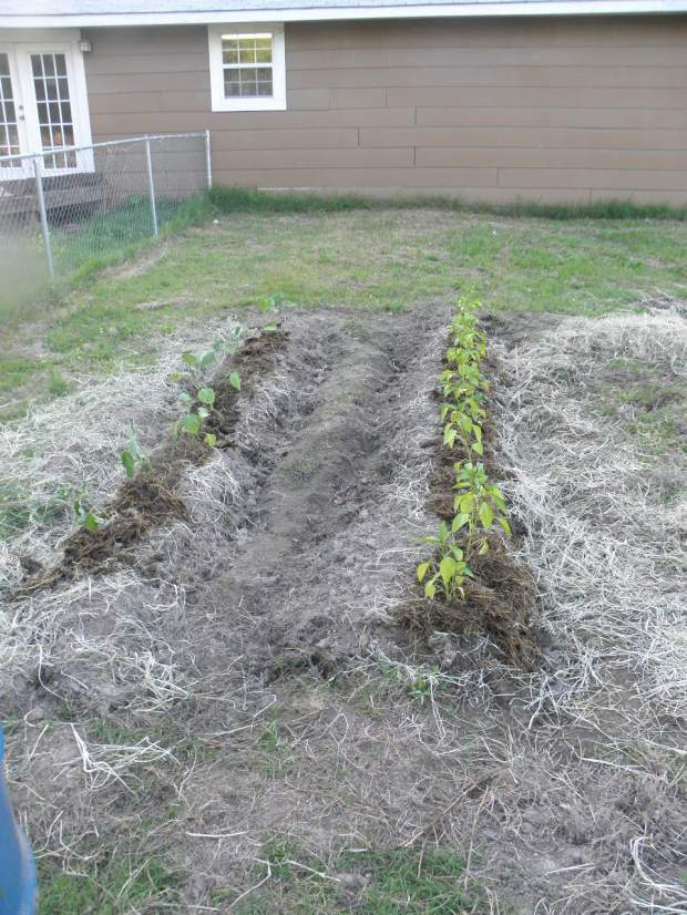 Trenched Garden Plot