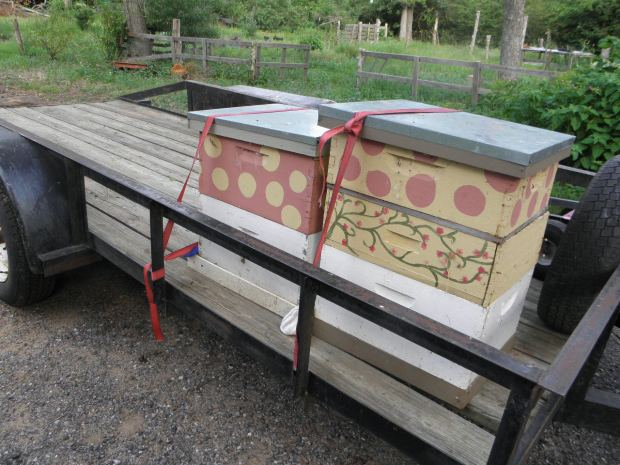 Bees on the trailer