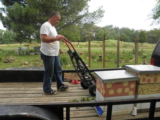 Using the dolly to move bees