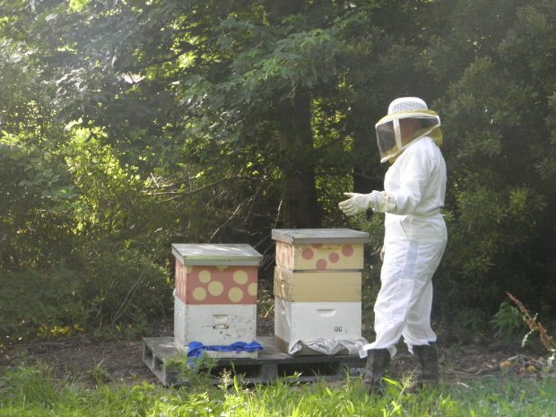 Bees in their new homes