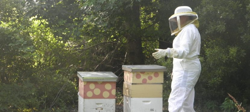 So How Do You Move A Beehive?
