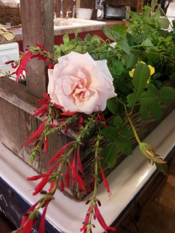 roses and herbs