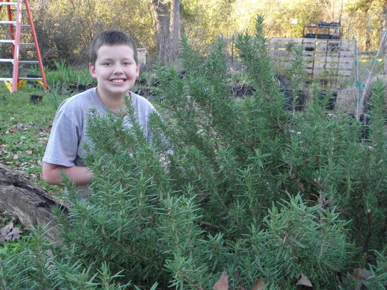 Jonathan and the rosemary.  What a great, tough plant