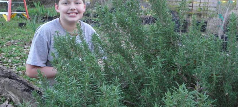 Rosemary For Remembrance- And A Whole LotMore!
