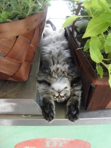Now that I am done fussing, I will go chill like our farm cat- Cheezit
