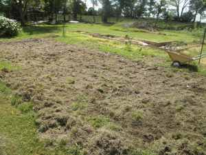 The freshly tilled garden patch, soon to be seeded with hairy vetch.