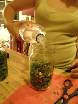 Herbal Tinctures- What Are They & How To Make One