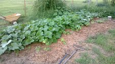 new pumpkin patch