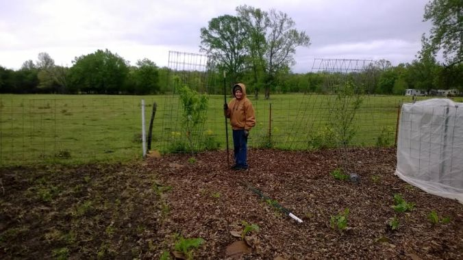 jonathan in the garden covering peach trees