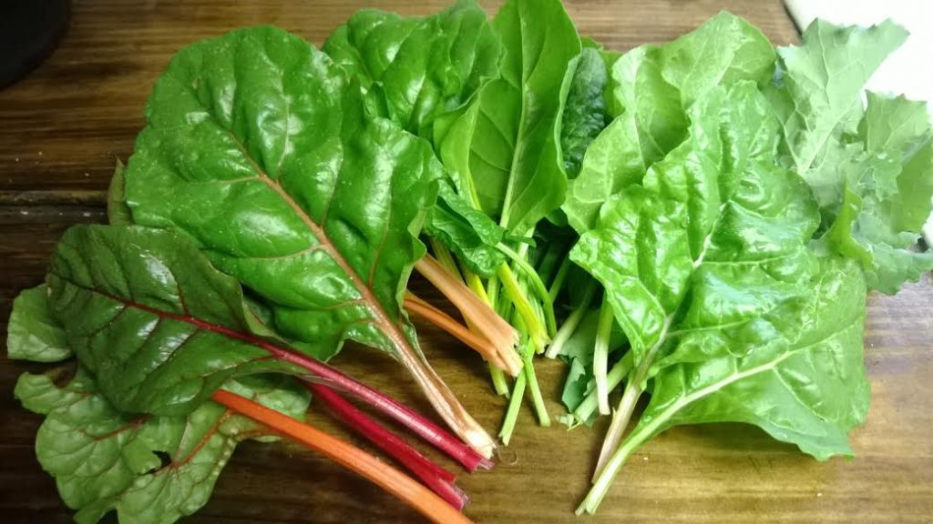 swiss chard from the garden