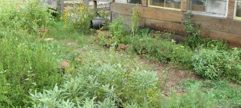 Mastering The Art Of HerbGardening