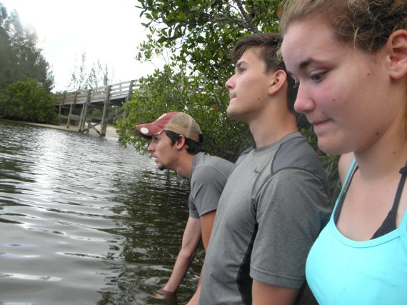 looking for manatees