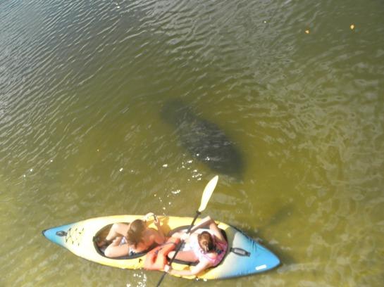 kayaking on Indian River