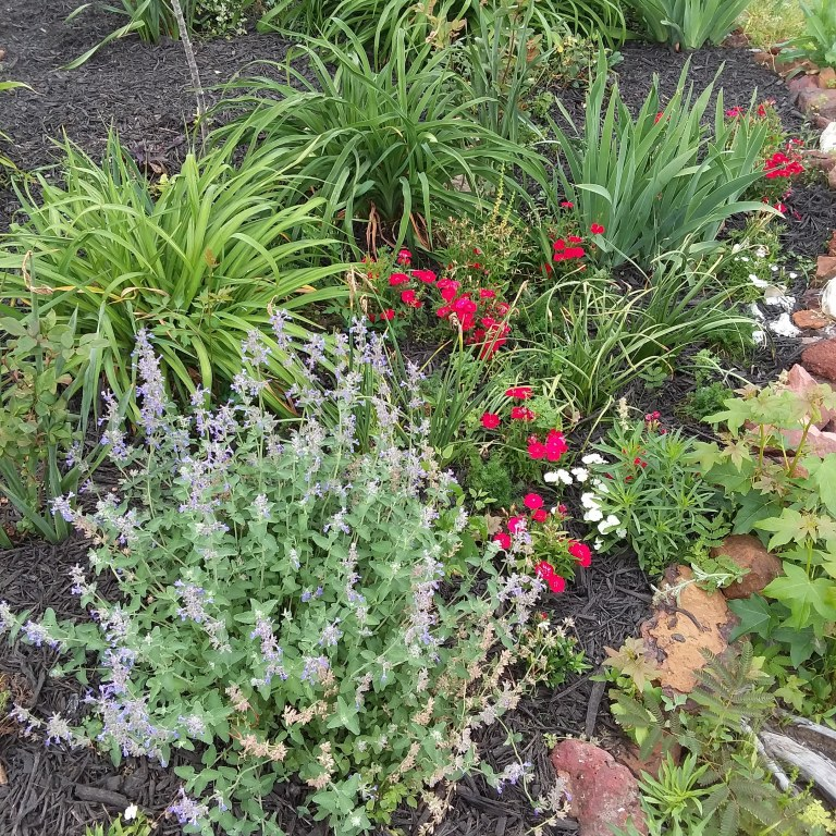 island bed garden with herbs