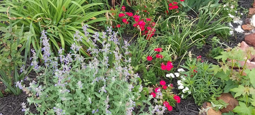 How To Choose Herbs For TheGarden