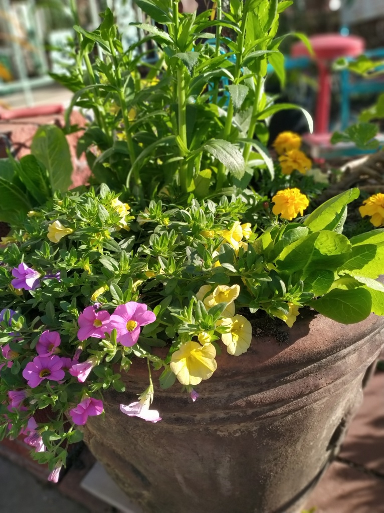 Spring flowers in a container garden fertilized with compost